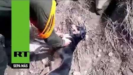 Policías rescatan a un perrito de un río arriesgando sus propias vidas
