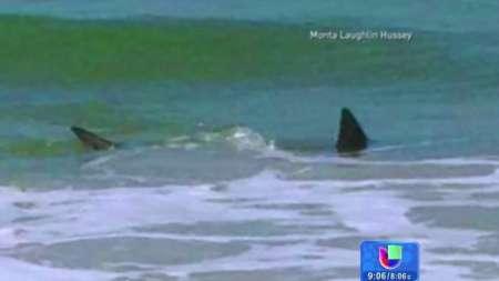 Otro ataque de tiburón en playas de Carolina del Norte