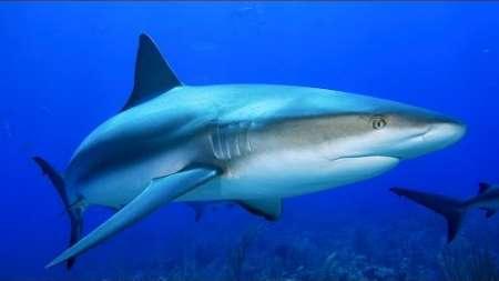 Alerta por ataques de tiburón en playas de La Florida