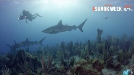 """Tiburones de Cuba en Discovery Channel """"The Sharks of Cuba"""""""